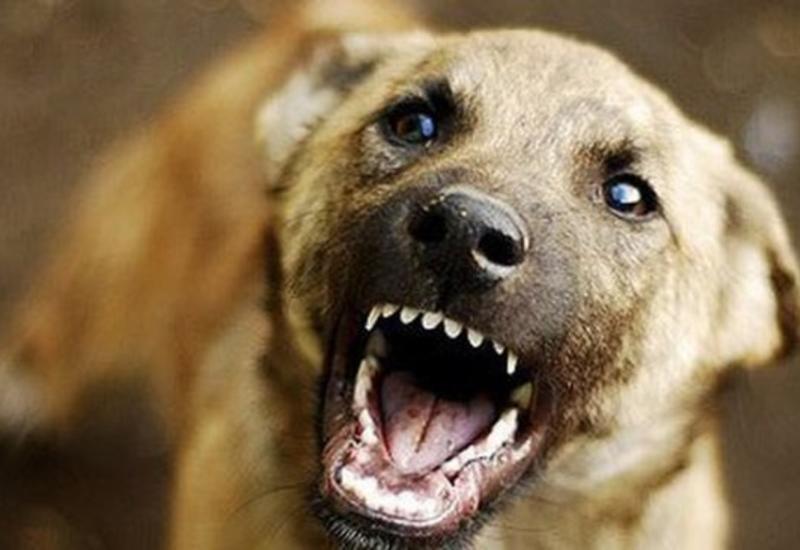В Гахе собака покусала 4-х человек