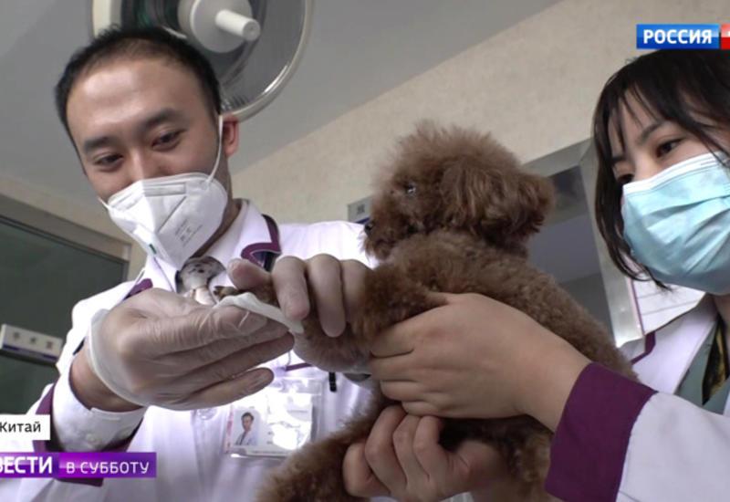 Ветеринары сказали, могут ли домашние животные заразить хозяев коронавирусом