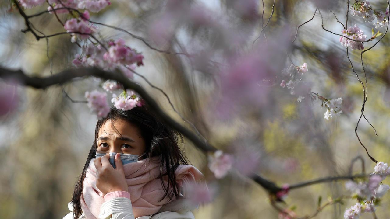 Коронавирус не помеха: как в мире встречают сезон цветения сакуры