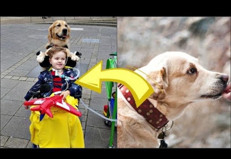 3-летний мальчик умирал, но произошло настоящее чудо, когда в больничную палату пришёл пёс