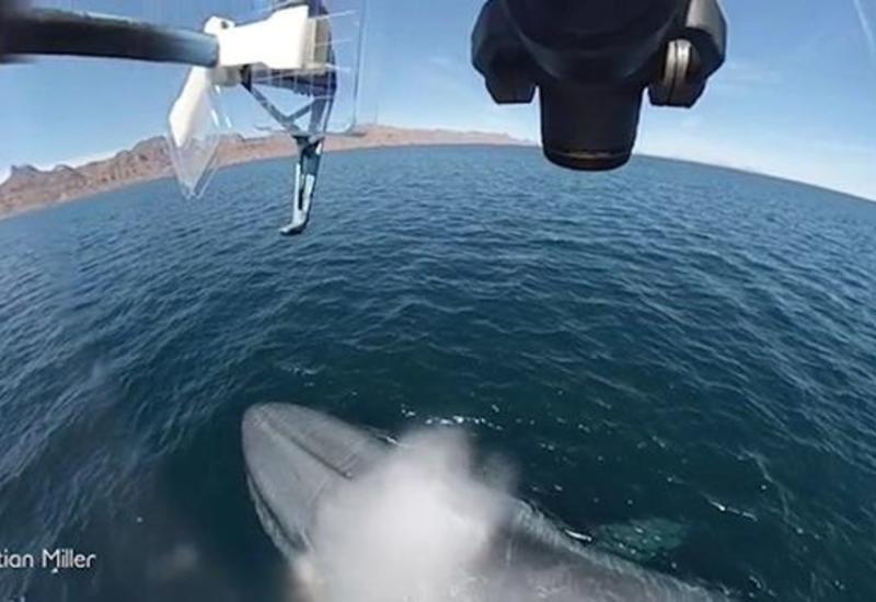 """Синий кит """"выстрелил"""" фонтаном в дрон"""