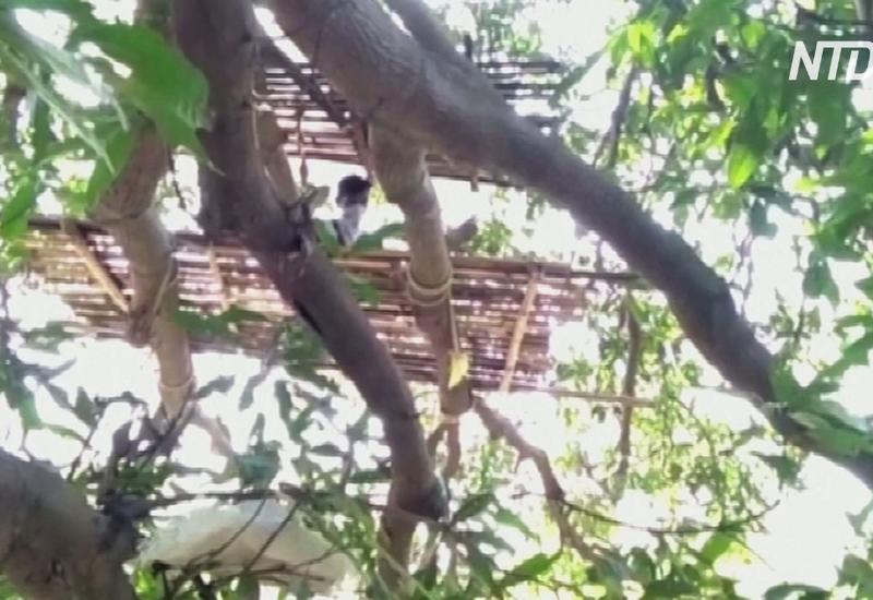 Коронавирус в Индии: люди вынуждены самоизолироваться на деревьях
