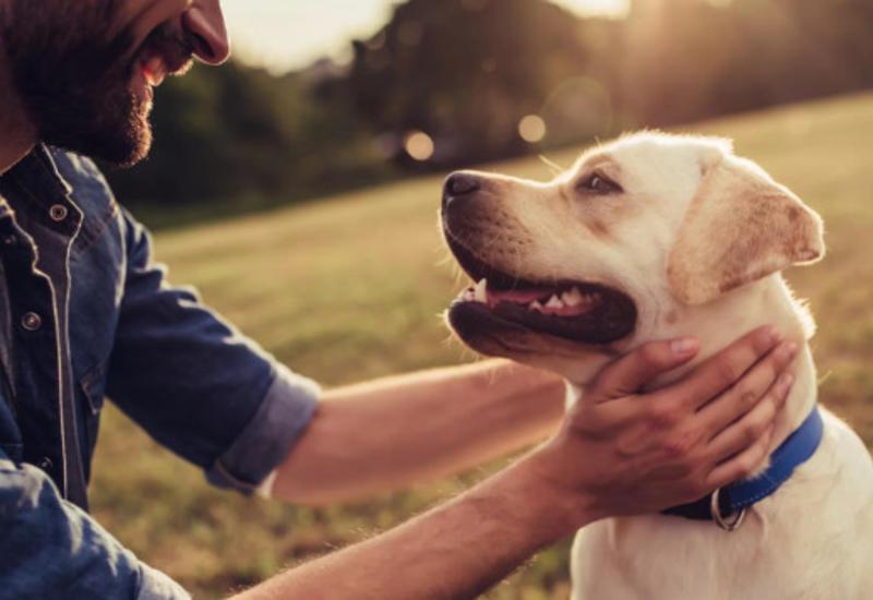 Можно ли выгуливать домашних животных во время карантина?