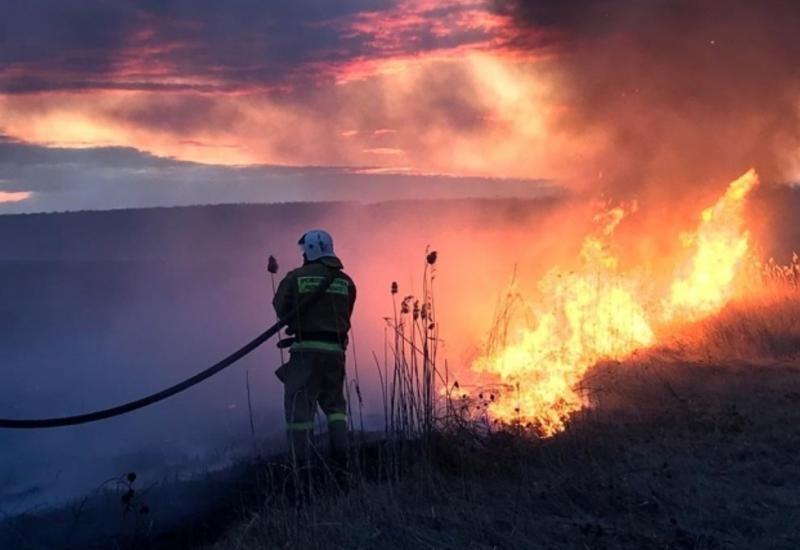 Пожарные ликвидировали открытое горение в лесу у Чернобыльской АЭС