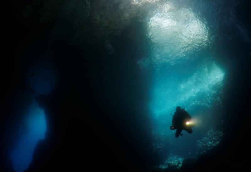 50 metr uzunluğunda nəhəng dəniz canlısı tapıldı
