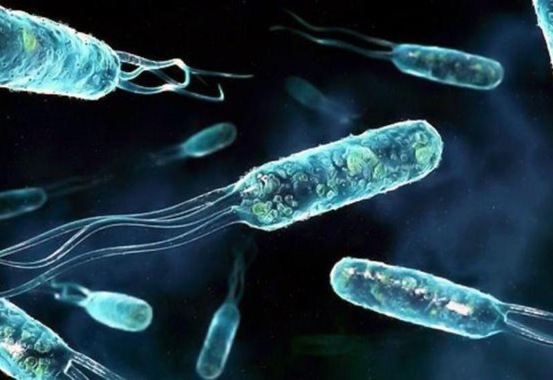 Rusiya alimləri Arktikada nefti parçalayan bakteriyalar aşkar ediblər