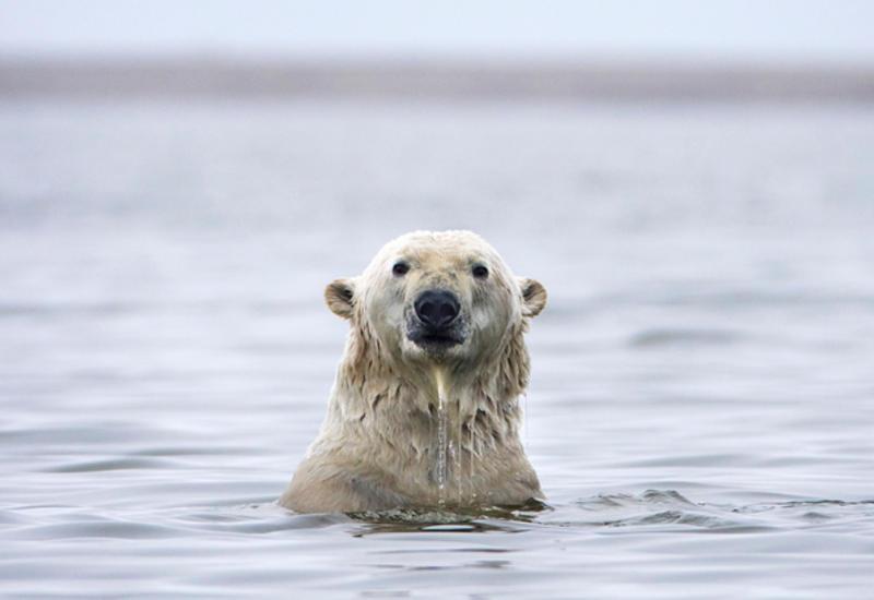 Озоновый слой над Арктикой восстановился