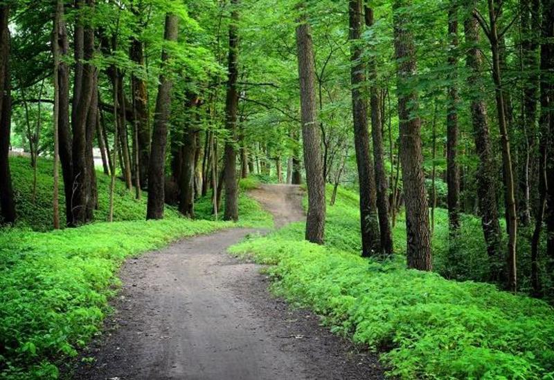В Азербайджане расширяются лесные территории