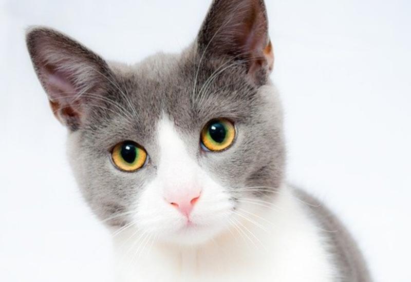 В Москве на карантин поместили кошку с COVID-19