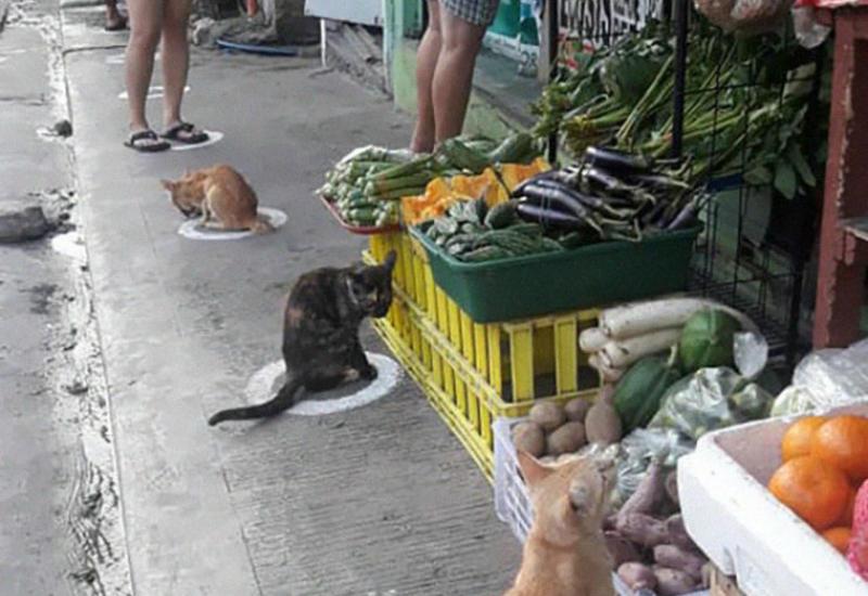Бездомные кошки на Филиппинах соблюдают социальную дистанцию лучше людей