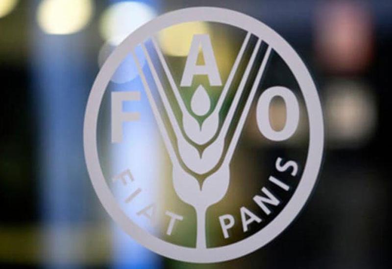 FAO реализует новые проекты в Азербайджане