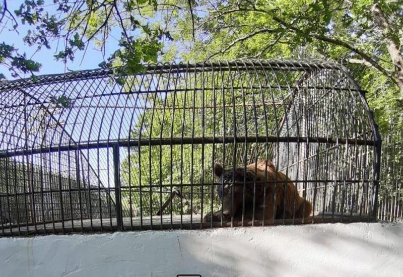 Министерство о судьбе пойманного в Шеки медведя
