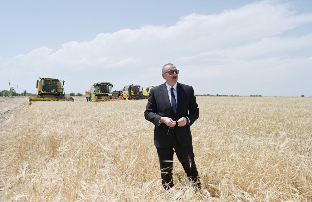 Президент Ильхам Алиев присутствовал на церемонии начала уборки пшеницы в Агджабеди