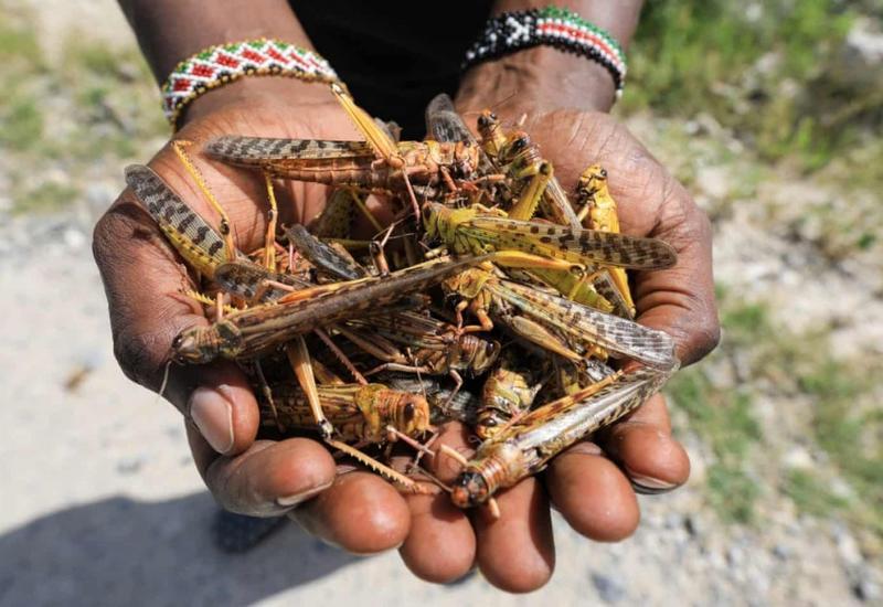 Пять миллионов человек подвержены риску голода в Восточной Африке