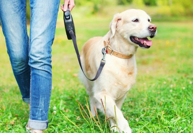 В карантинные выходные можно будет выгуливать собак