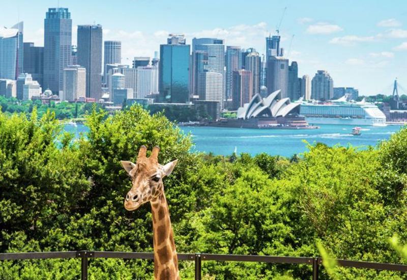 Австралию не планируют открывать для туристов до 2021 года