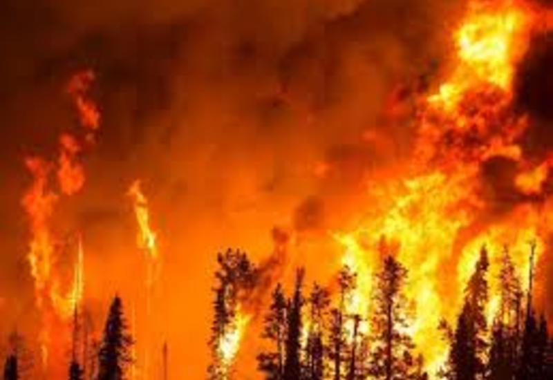В России горят около миллиона гектаров леса