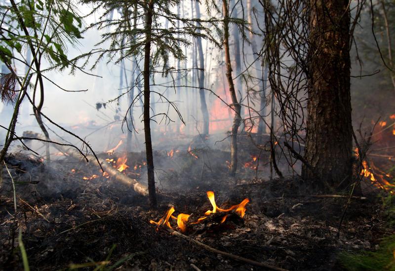 На севере Турции сгорели 450 га леса