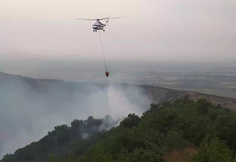 Пожар на территории национального парка «Шахдаг» в Габале потушен