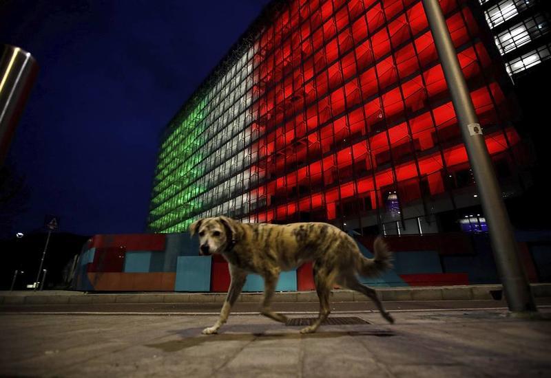 У итальянских кошек и собак нашли антитела к коронавирусу