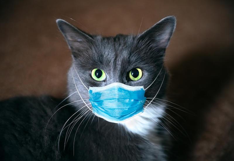 В Великобритании подтвердили первый случай коронавируса у кошки