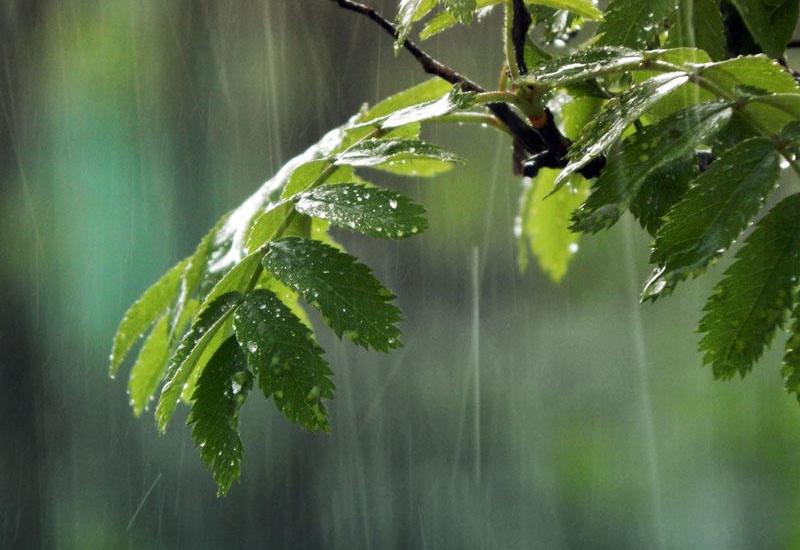 В Баку ожидаются дождь с грозой и сильный ветер