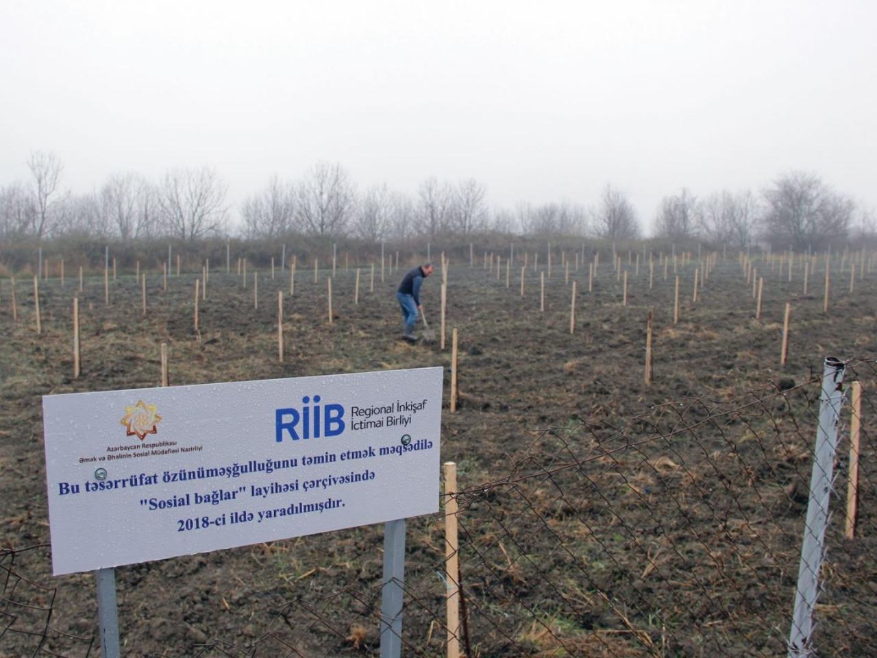 В Азербайджане создадут садовые хозяйства еще для 250 малообеспеченных семей