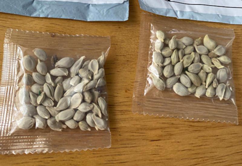 Сотни людей получили по почте таинственные семена из Китая
