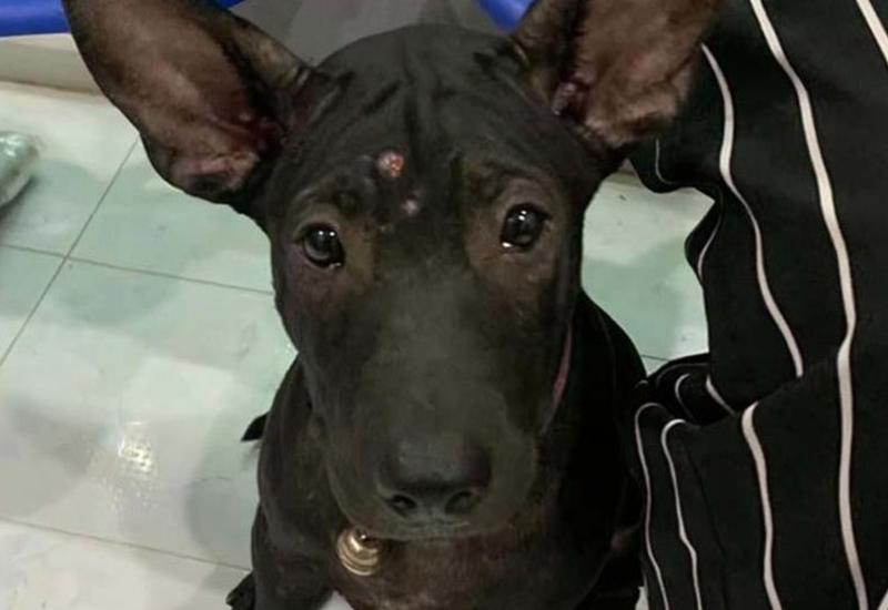 После шести часов блужданий по Бангкоку потерявшийся щенок нашел выход: он вспомнил дорогу к ветеринару, который и отвел его домой