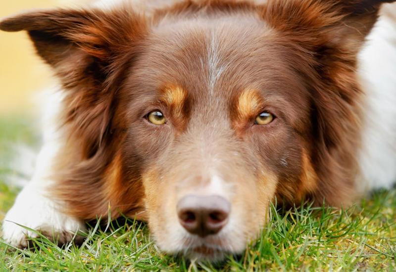 Кинологи назвали самые обучаемые породы собак