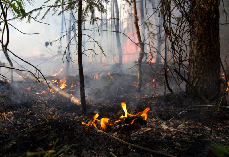В Калифорнии из-за лесного пожара эвакуируют восемь тысяч человек