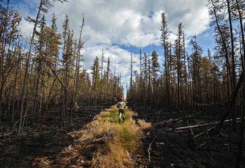В России борются с лесными пожарами