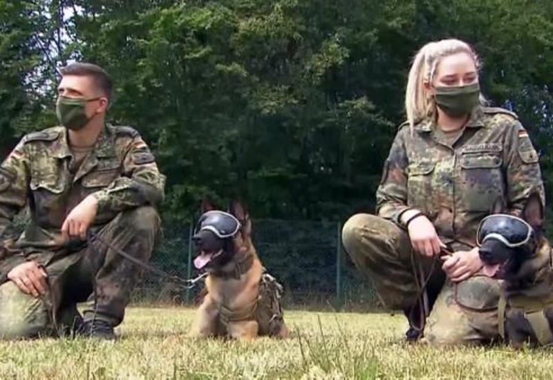 Служебных собак в Германии научат выявлять коронавирус