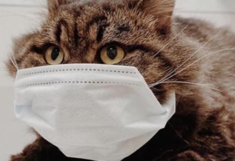 У домашних животных вновь обнаружили коронавирус