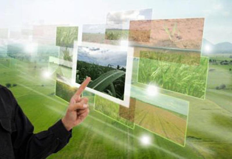 В Азербайджане определят реальных пользователей аграрных субсидий и лучших фермеров