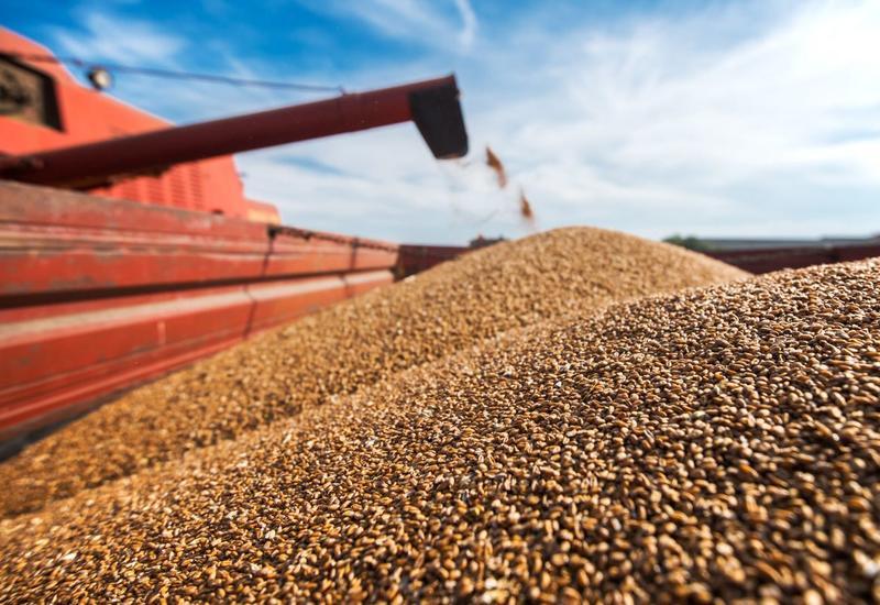 В Азербайджане утвержден новый стандарт качества пшеницы