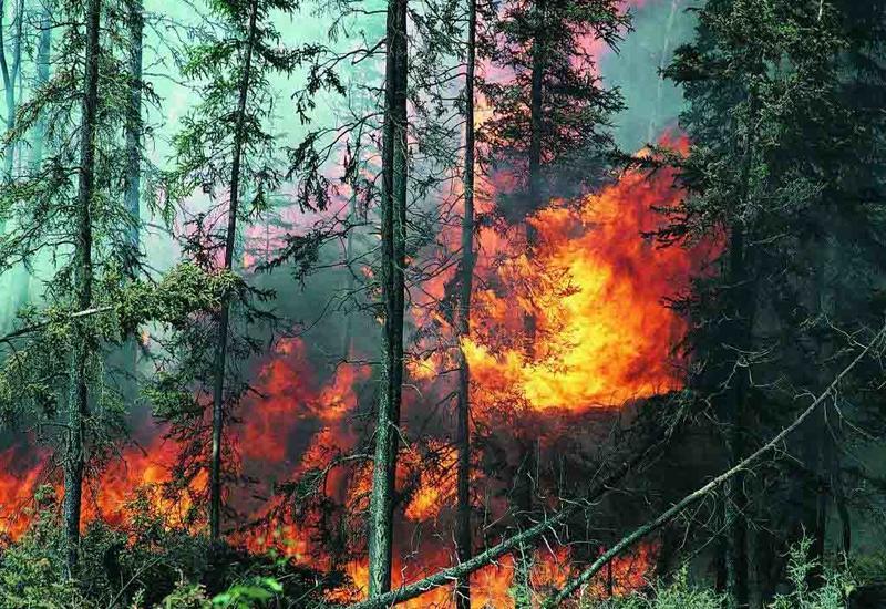 Крупный лесной пожар начался в Калифорнии