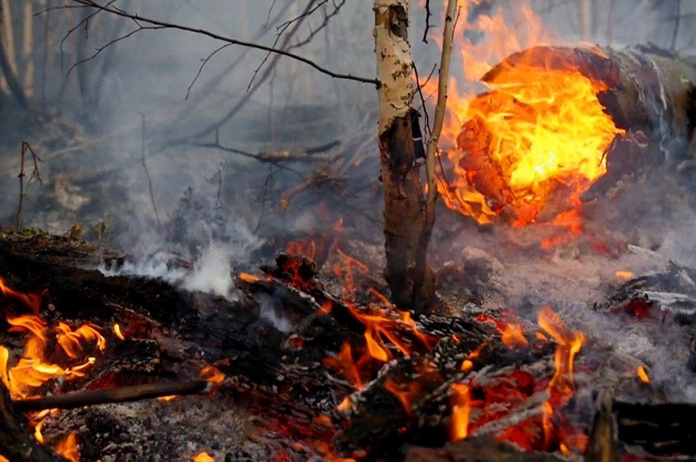 Россия охвачена лесными пожарами