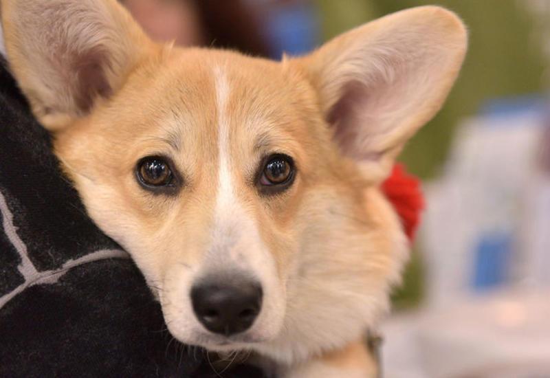 Кинологи назвали подходящие породы собак для жителей города