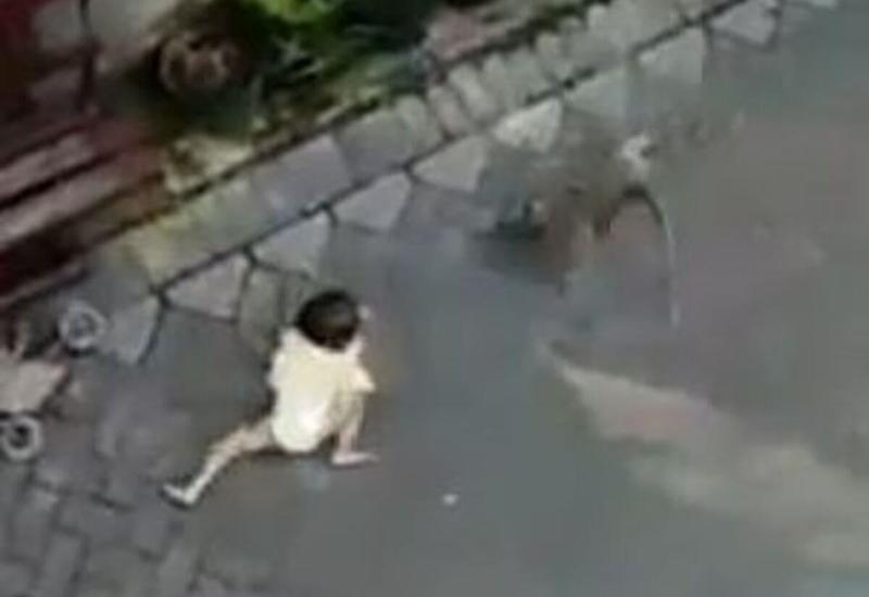 Обезьяна на мотоцикле «попыталась похитить» ребёнка в Индонезии