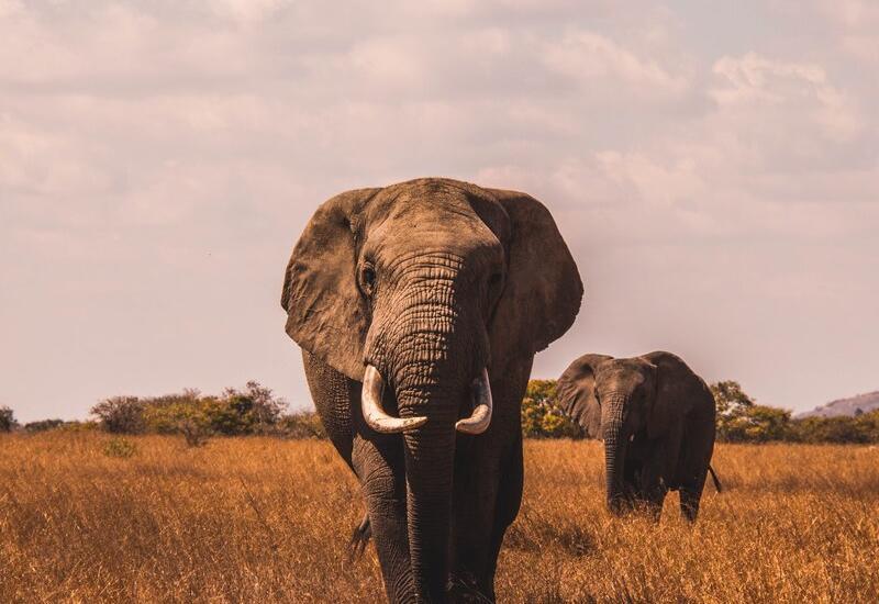 Стала известна причина исчезания вымерших видов животных
