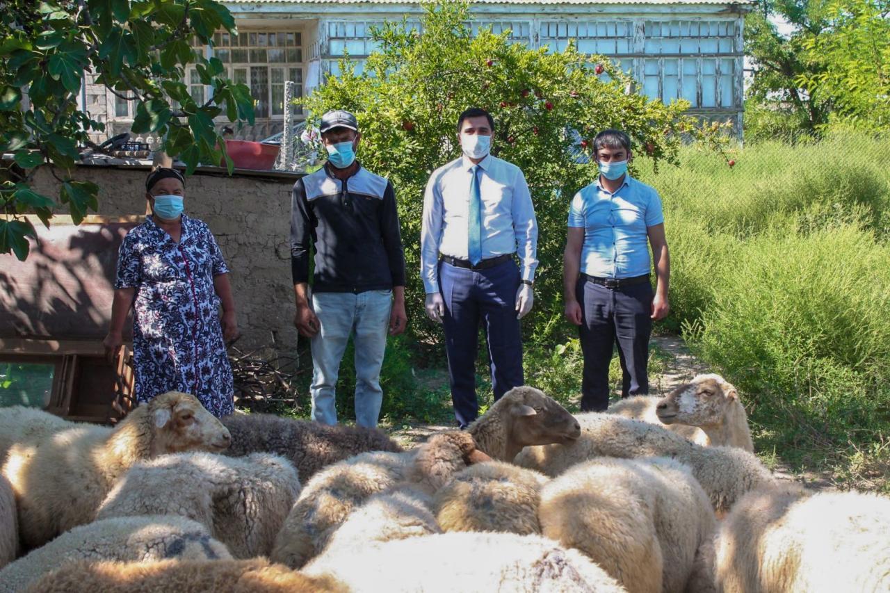 В прифронтовой зоне Азербайджана создаются малые хозяйства для семей, привлеченных к программе самозанятости