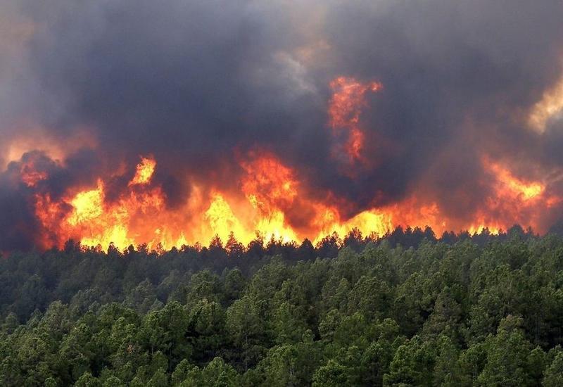 Сожжение лесов в Шуше
