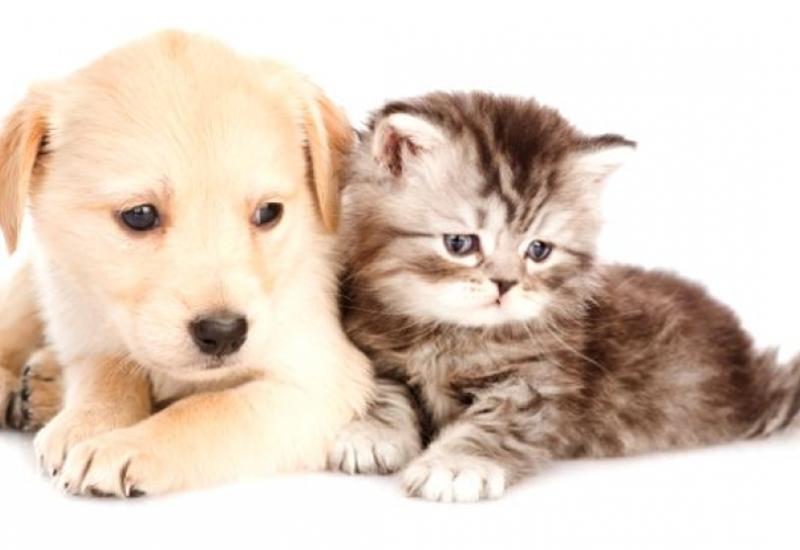 Кошки и собаки могут заразиться коронавирусом