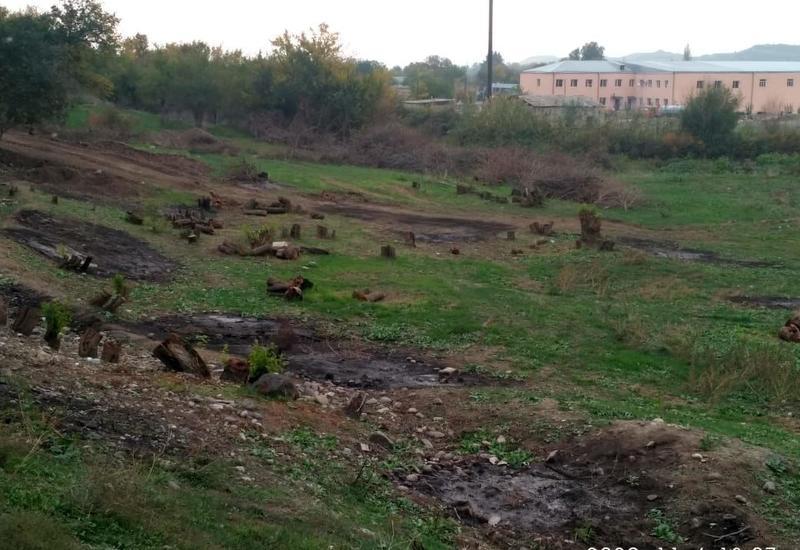 На деоккупированных территориях уничтожено более 54 тыс. га лесного фонда
