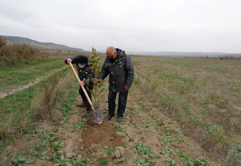 В Губадлы прошла акция по посадке деревьев