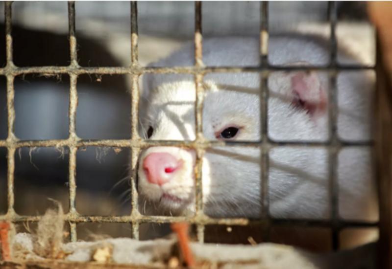 Биолог призвала опасаться животных из-за коронавируса