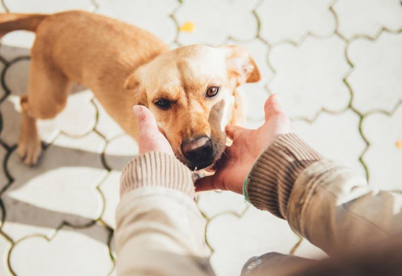 В США перевезли 45 собак, спасенных от мясников в Китае