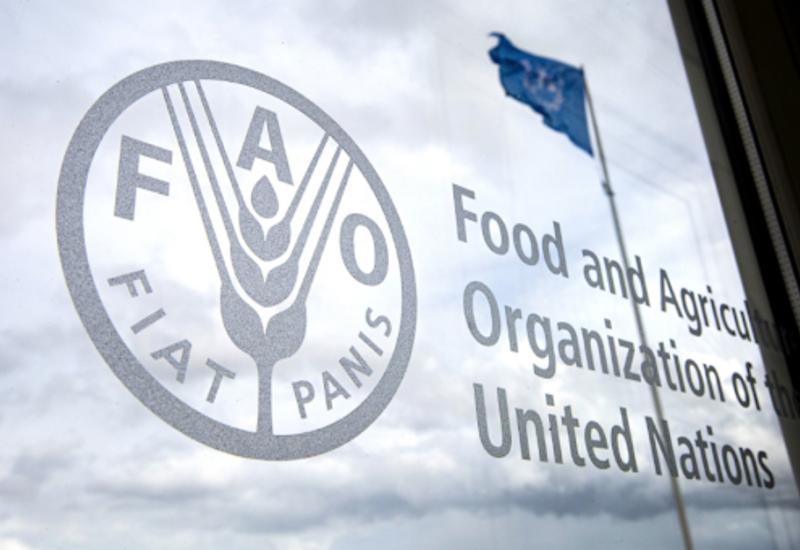 Завершается разработка программы сотрудничества Азербайджана с продовольственной организацией ООН