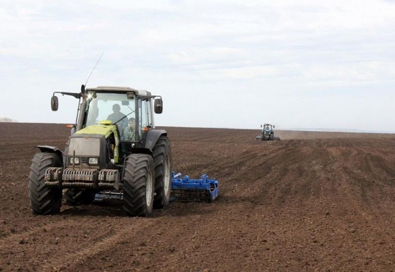 В Физули почти 30 тыс. га засеяли пшеницей